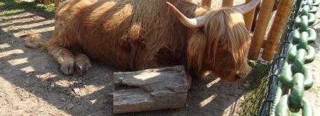 Výlet - ranč pod babicou - DSC07048