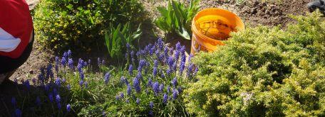 Práca na dvore - okopávanie a sadenie v skalke (21.04. 2020) - DSC02658