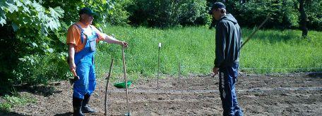 Práca v záhrade - Dsc00495